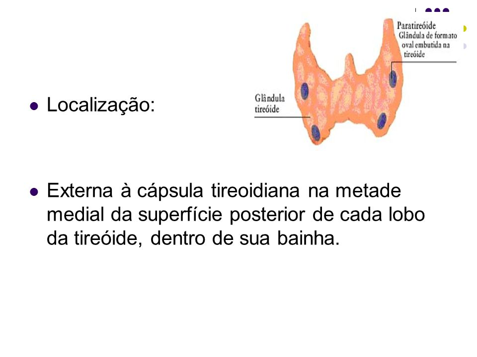 Localização: Externa à cápsula tireoidiana na metade medial da superfície posterior de cada lobo da tireóide, dentro de sua bainha.