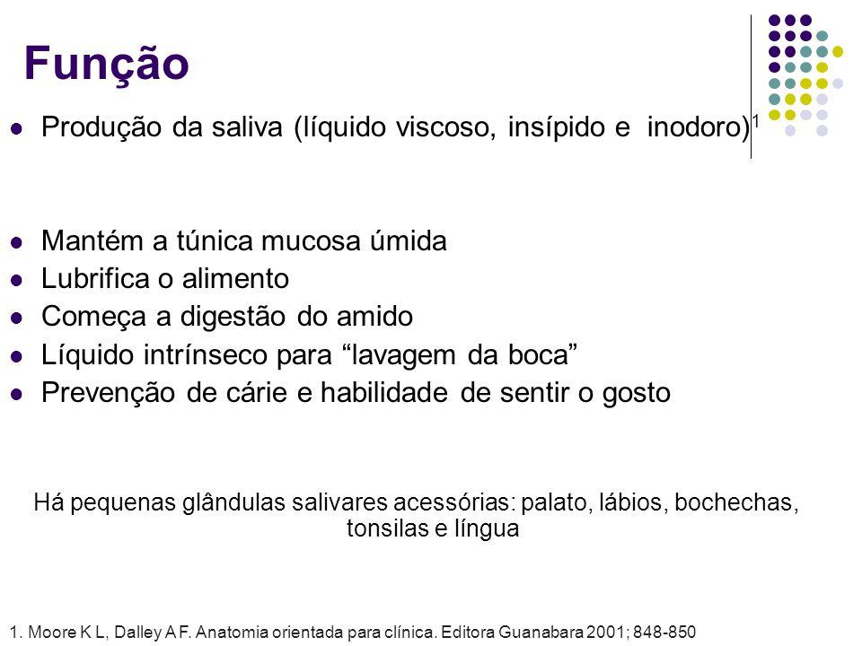 Função Produção da saliva (líquido viscoso, insípido e inodoro)1
