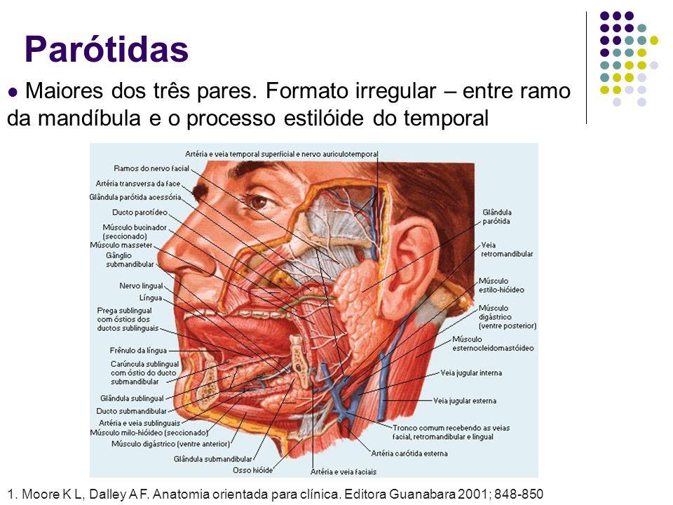 Parótidas Maiores dos três pares. Formato irregular – entre ramo da mandíbula e o processo estilóide do temporal.