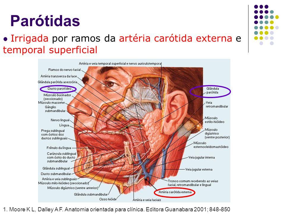 Parótidas Irrigada por ramos da artéria carótida externa e temporal superficial.
