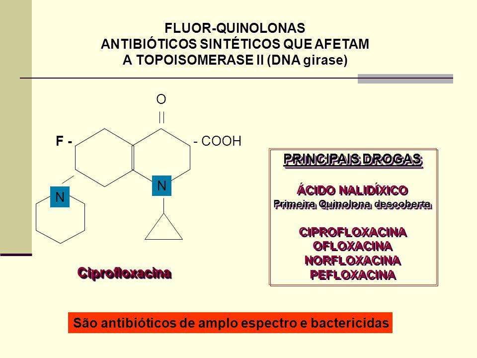 ANTIBIÓTICOS SINTÉTICOS QUE AFETAM A TOPOISOMERASE II (DNA girase)