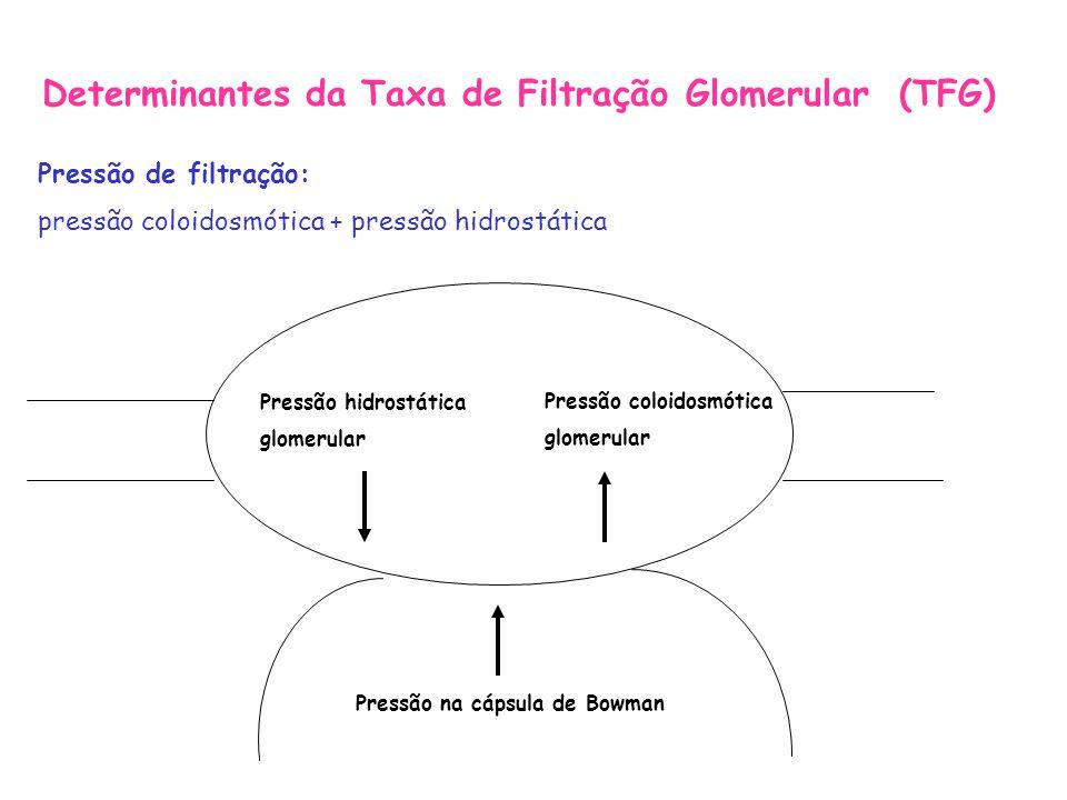 Determinantes da Taxa de Filtração Glomerular (TFG)