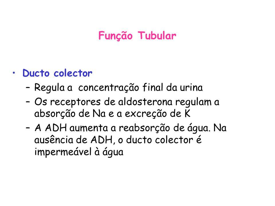Função Tubular Ducto colector Regula a concentração final da urina