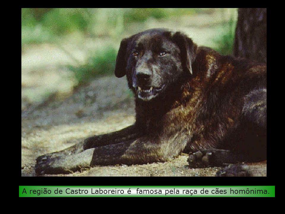 A região de Castro Laboreiro é famosa pela raça de cães homônima.