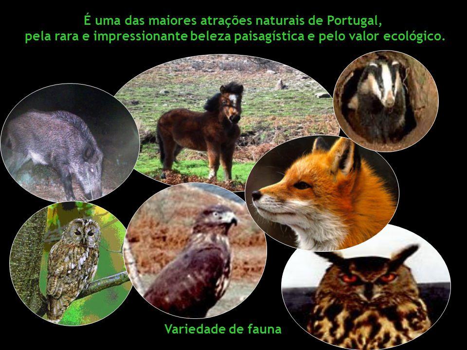 É uma das maiores atrações naturais de Portugal,
