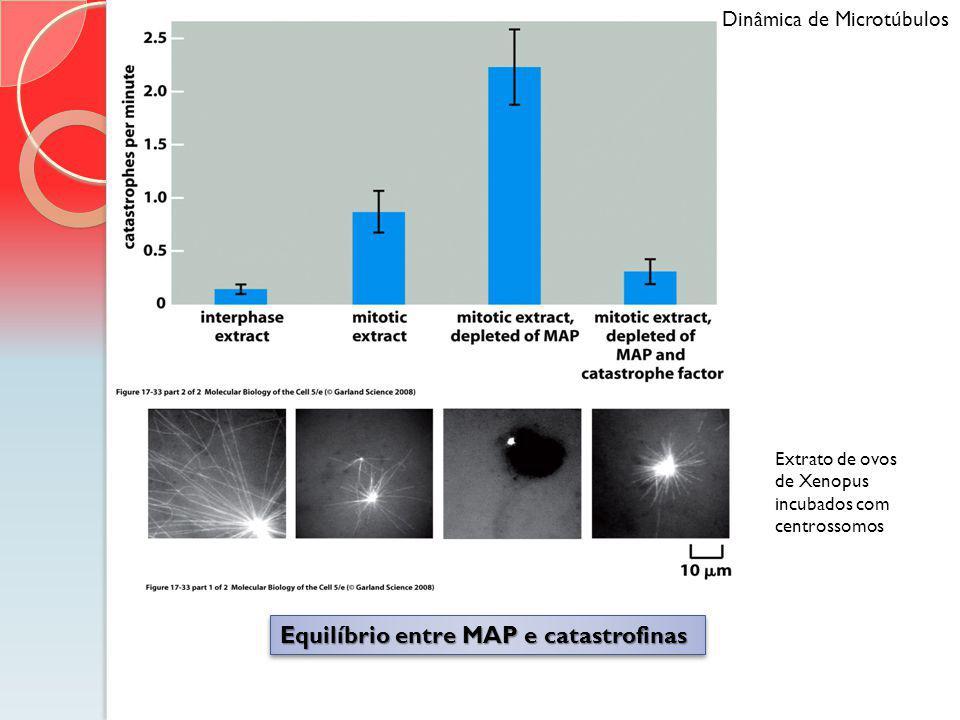 Equilíbrio entre MAP e catastrofinas