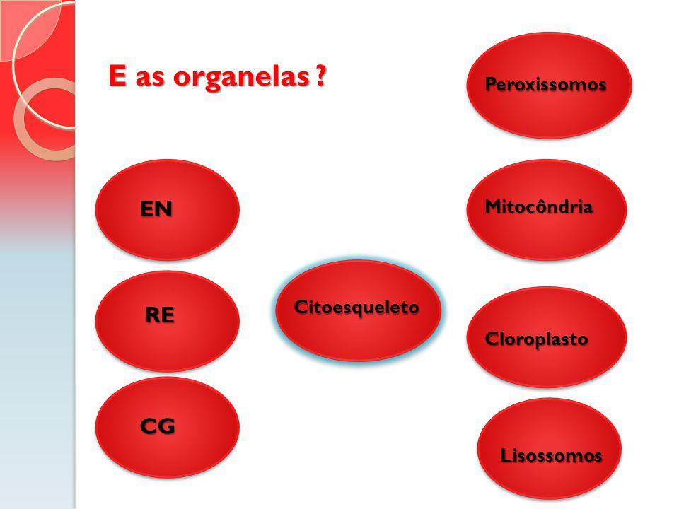 E as organelas EN RE CG Peroxissomos Mitocôndria Citoesqueleto