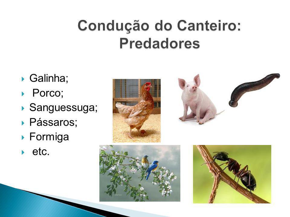 Condução do Canteiro: Predadores