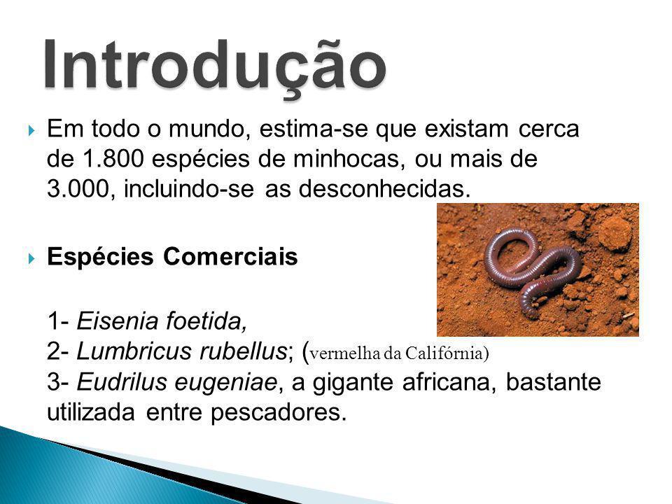 Introdução Em todo o mundo, estima-se que existam cerca de 1.800 espécies de minhocas, ou mais de 3.000, incluindo-se as desconhecidas.