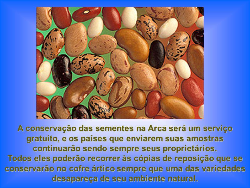 A conservação das sementes na Arca será um serviço gratuito, e os países que enviarem suas amostras continuarão sendo sempre seus proprietários.