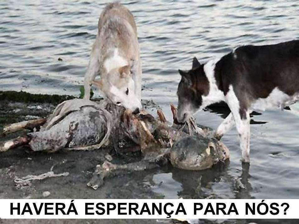 HAVERÁ ESPERANÇA PARA NÓS