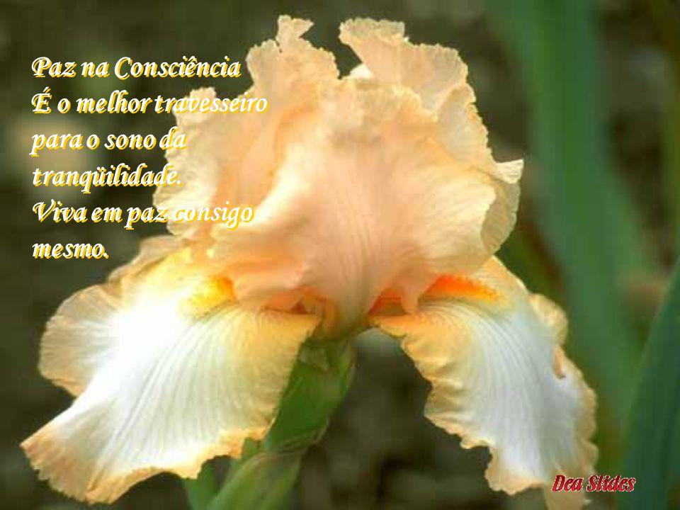Paz na Consciência É o melhor travesseiro para o sono da tranqüilidade