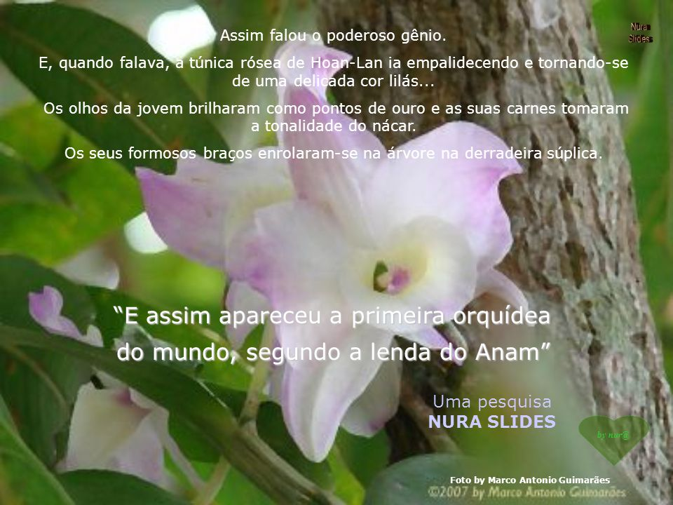 E assim apareceu a primeira orquídea