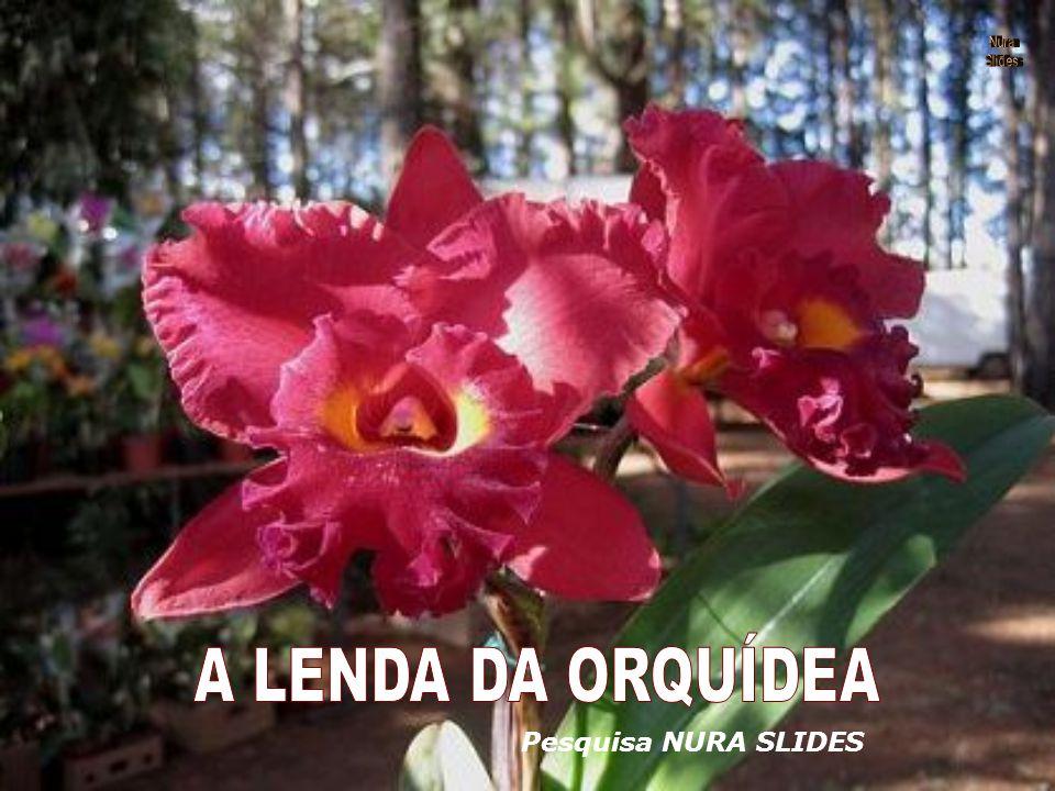 Nura Slides A LENDA DA ORQUÍDEA Pesquisa NURA SLIDES