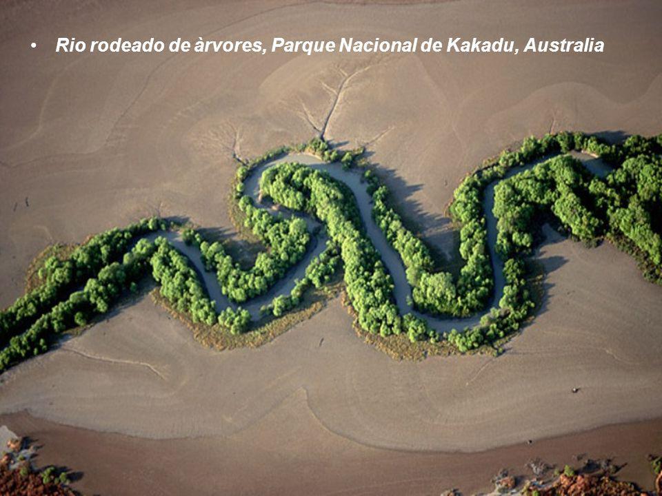 Rio rodeado de àrvores, Parque Nacional de Kakadu, Australia