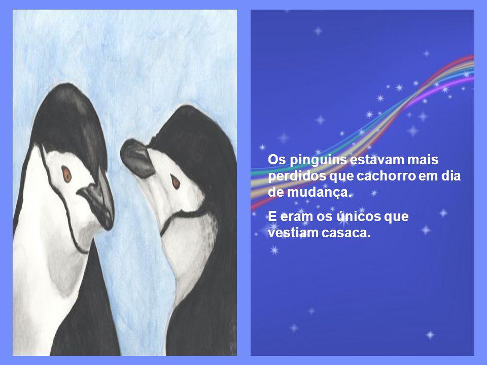 Os pinguins estavam mais perdidos que cachorro em dia de mudança.