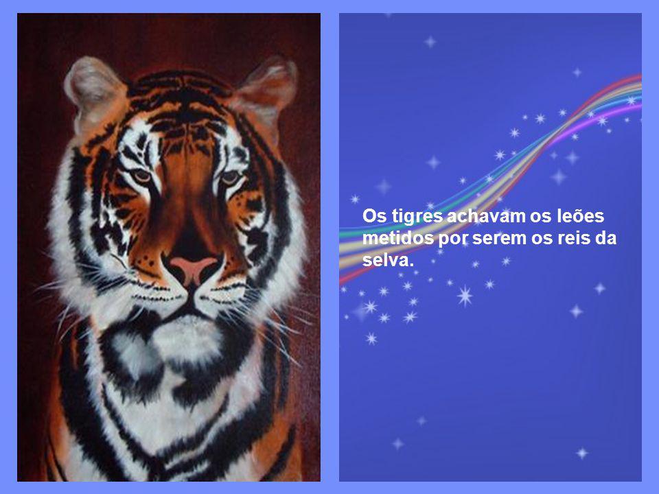 Os tigres achavam os leões metidos por serem os reis da selva.