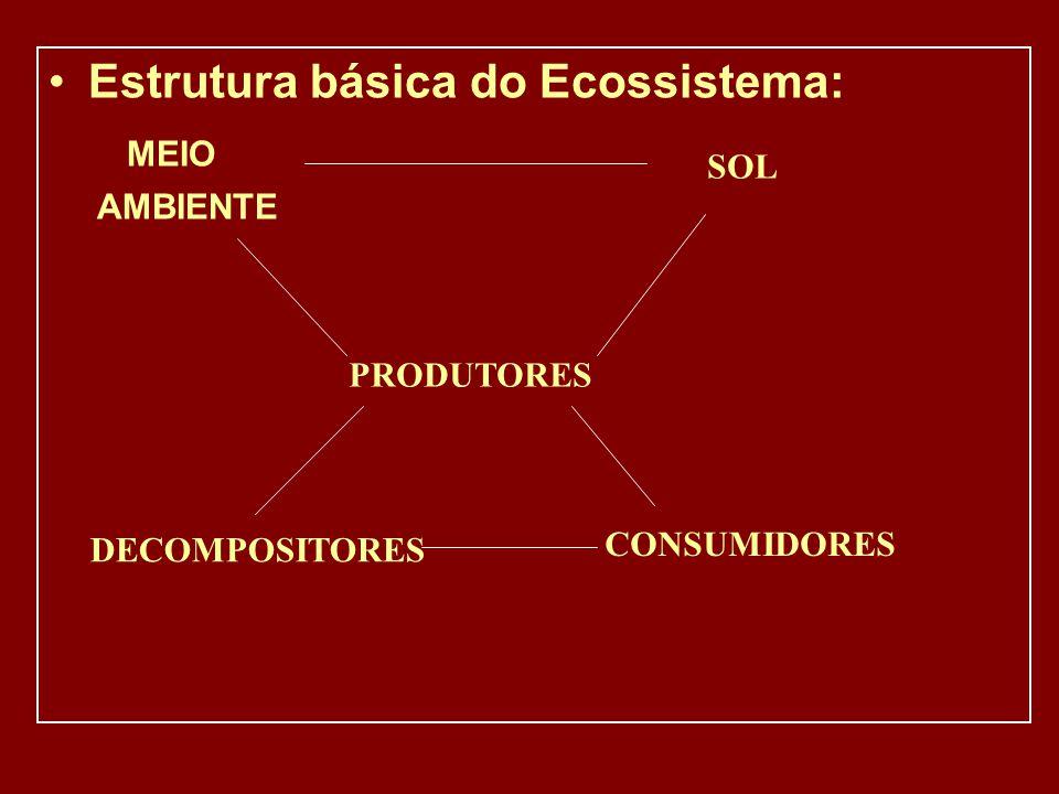 Estrutura básica do Ecossistema: MEIO