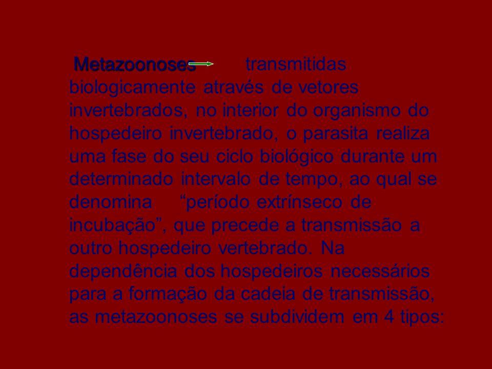 Metazoonoses transmitidas biologicamente através de vetores invertebrados, no interior do organismo do hospedeiro invertebrado, o parasita realiza uma fase do seu ciclo biológico durante um determinado intervalo de tempo, ao qual se denomina período extrínseco de incubação , que precede a transmissão a outro hospedeiro vertebrado.