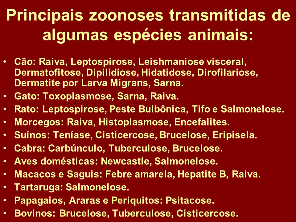 Principais zoonoses transmitidas de algumas espécies animais: