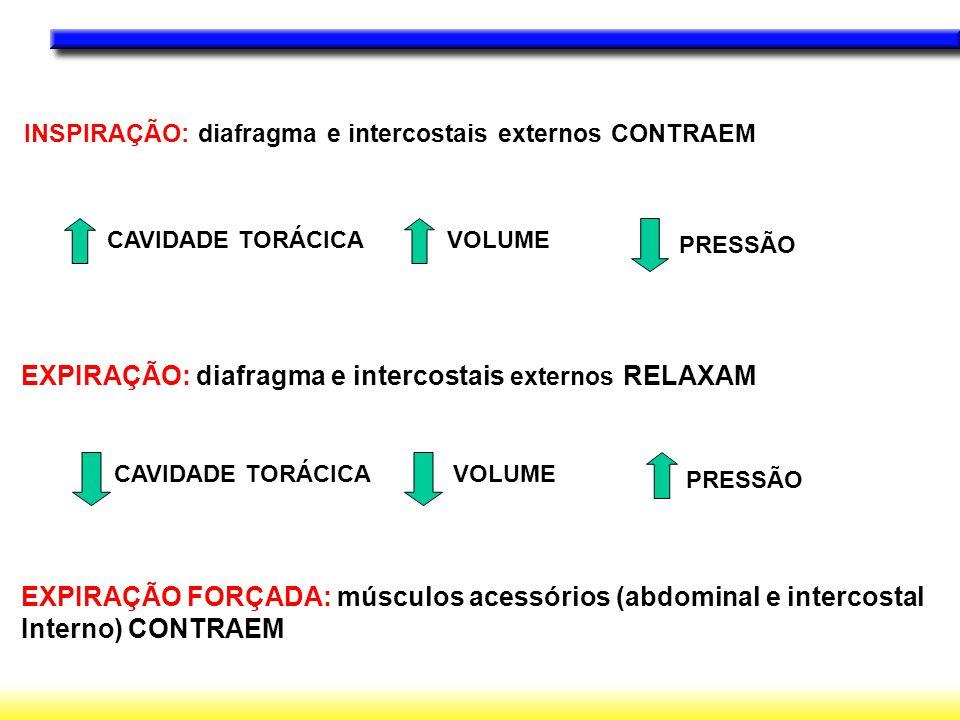EXPIRAÇÃO: diafragma e intercostais externos RELAXAM
