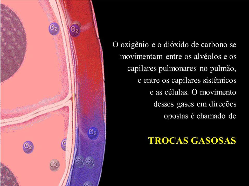 Trocas Gasosas TROCAS GASOSAS