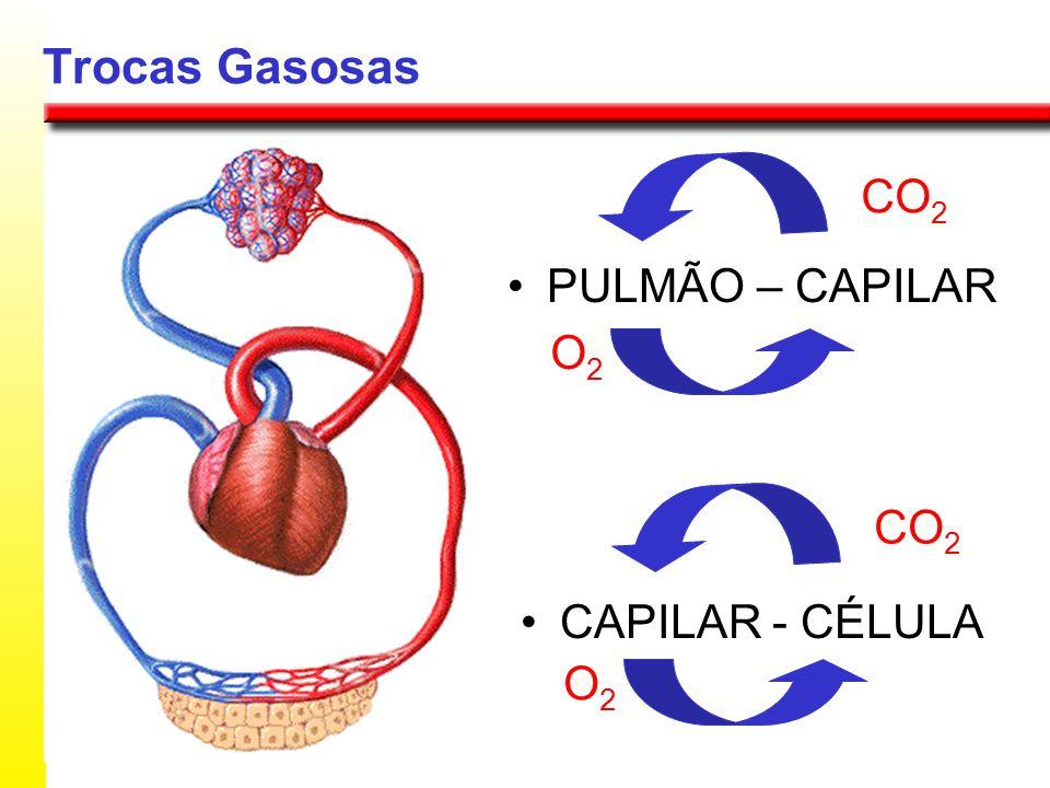 Trocas Gasosas CO2 PULMÃO – CAPILAR CAPILAR - CÉLULA O2 CO2 O2
