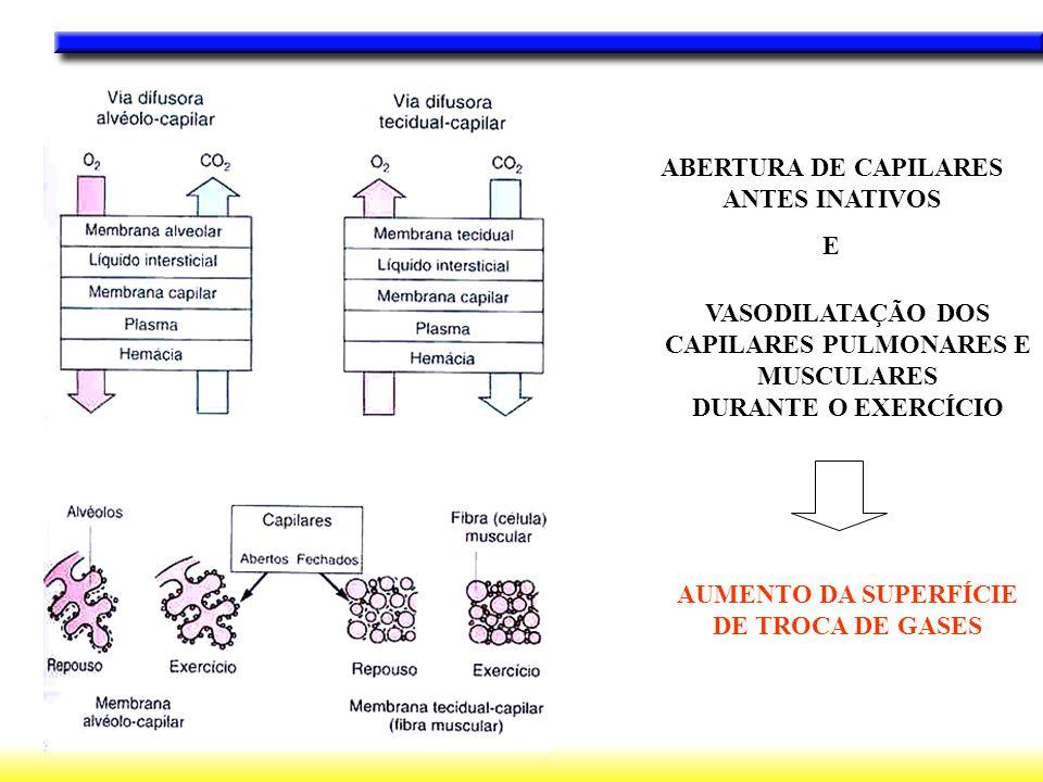 ABERTURA DE CAPILARES ANTES INATIVOS E