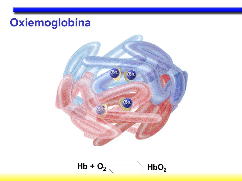 Oxiemoglobina Hb + O2 HbO2