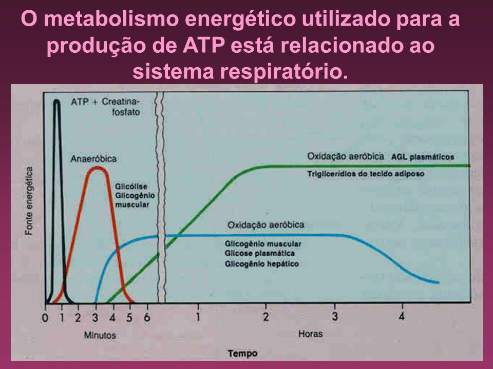O metabolismo energético utilizado para a produção de ATP está relacionado ao sistema respiratório.