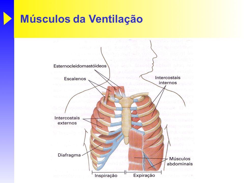 Músculos da Ventilação
