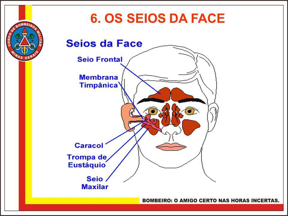 6. OS SEIOS DA FACE