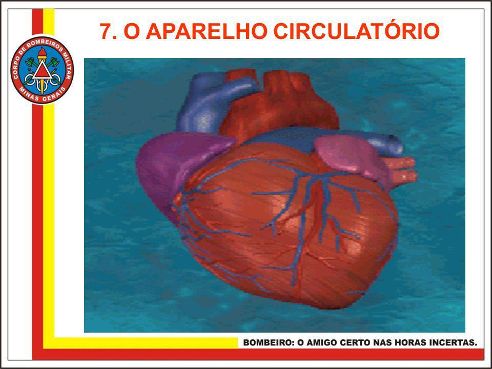 7. O APARELHO CIRCULATÓRIO