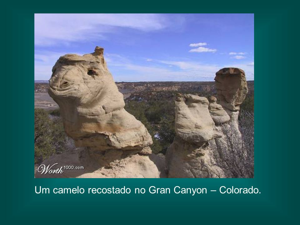 Um camelo recostado no Gran Canyon – Colorado.