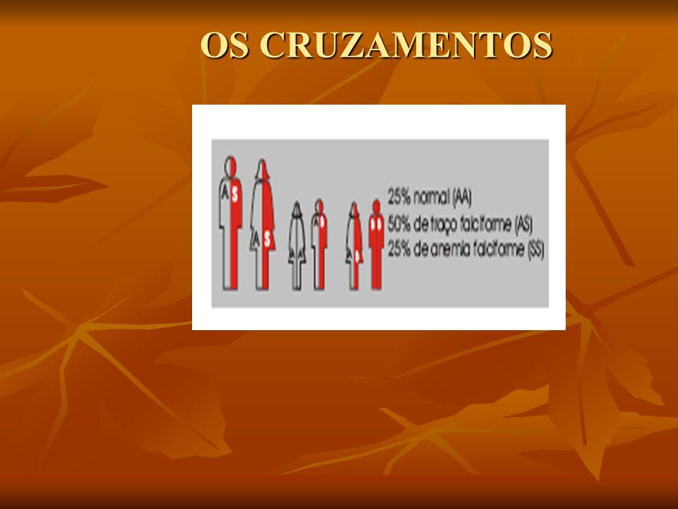 OS CRUZAMENTOS