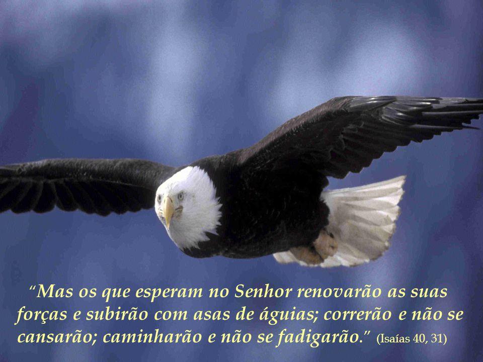 Mas os que esperam no Senhor renovarão as suas forças e subirão com asas de águias; correrão e não se cansarão; caminharão e não se fadigarão. (Isaías 40, 31)