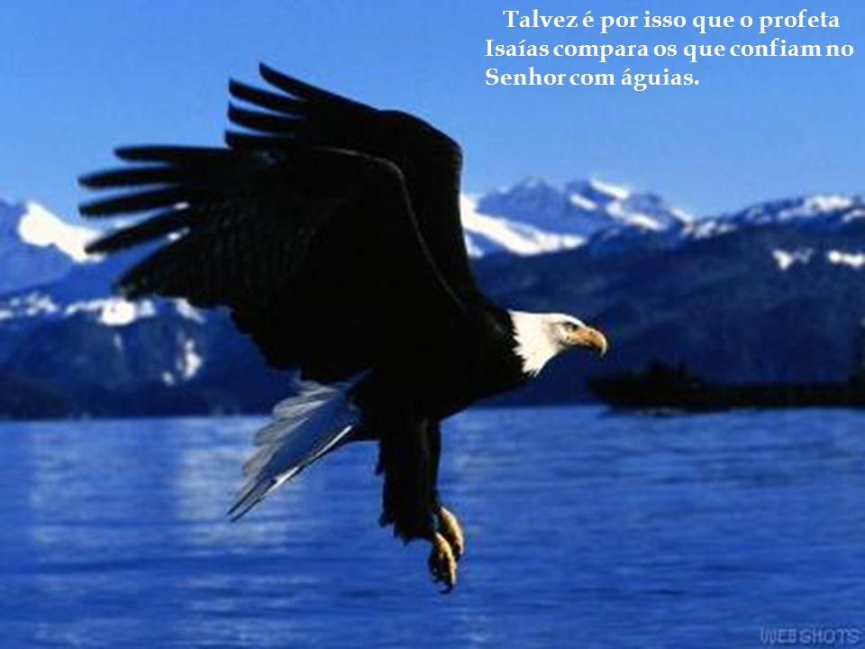 Talvez é por isso que o profeta Isaías compara os que confiam no Senhor com águias.