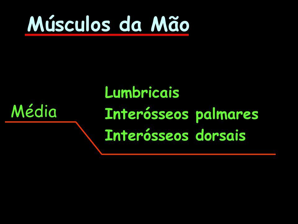 Músculos da Mão Média Lumbricais Interósseos palmares