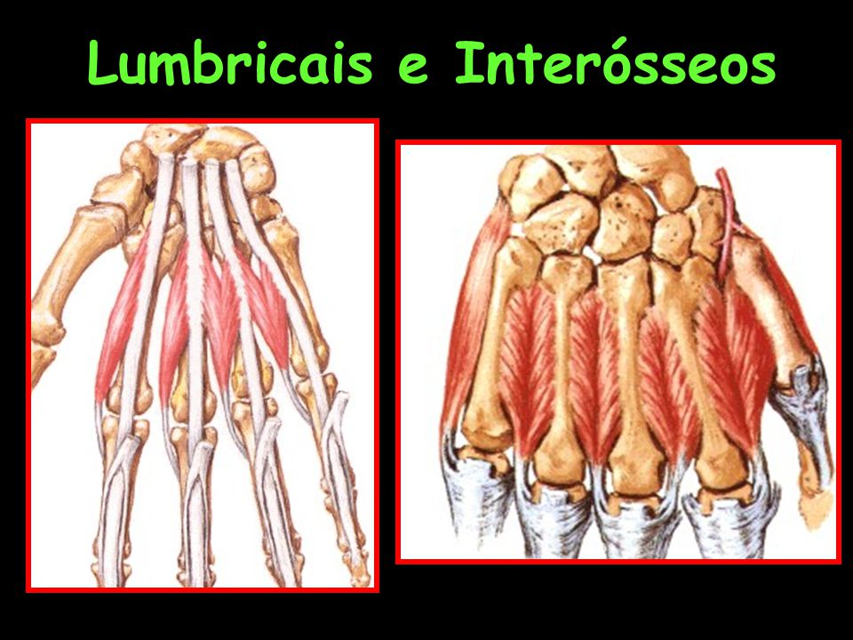 Lumbricais e Interósseos
