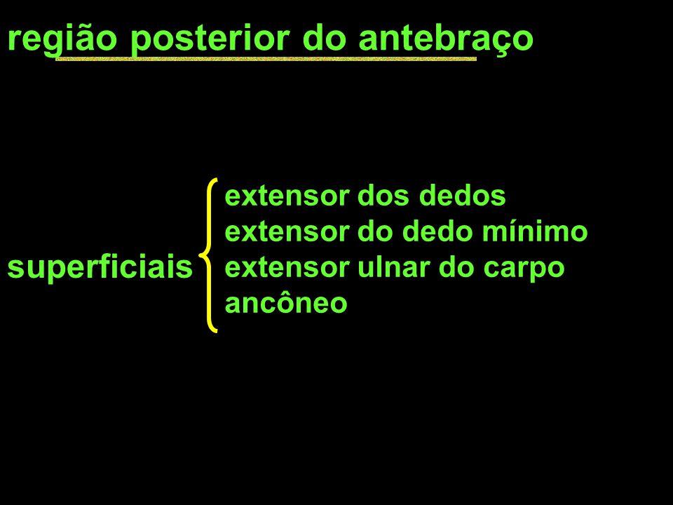 região posterior do antebraço