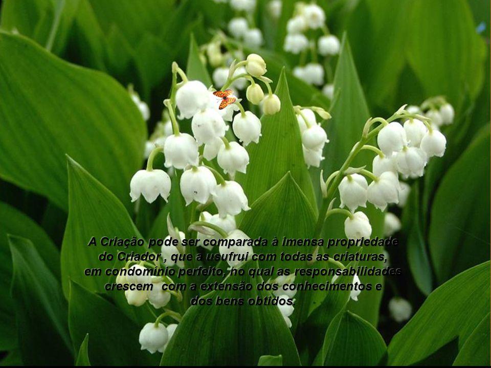 A Criação pode ser comparada à imensa propriedade