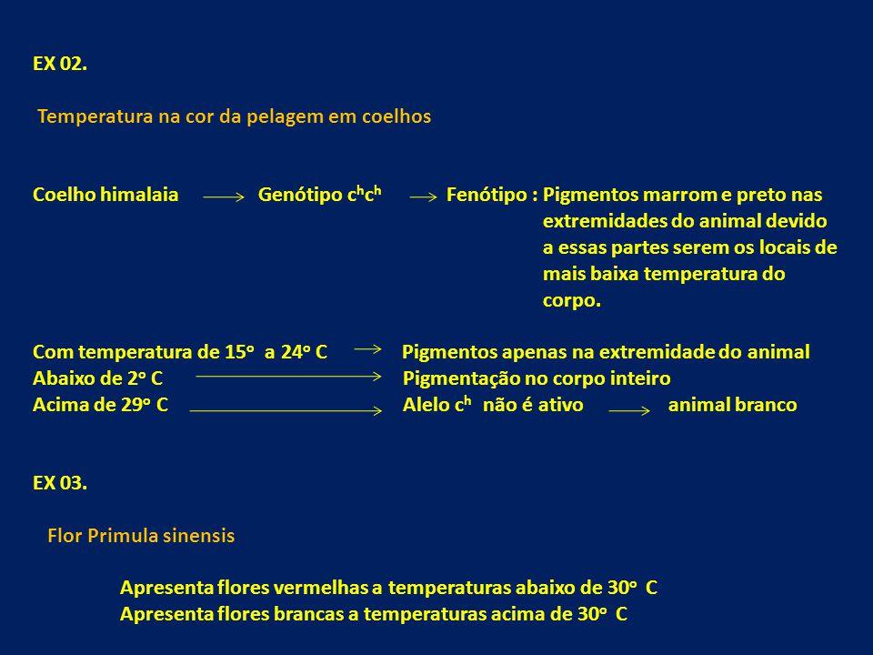 EX 02. Temperatura na cor da pelagem em coelhos. Coelho himalaia Genótipo chch Fenótipo : Pigmentos marrom e preto nas.