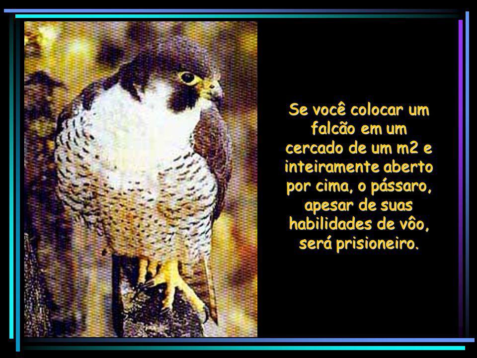 Se você colocar um falcão em um cercado de um m2 e inteiramente aberto por cima, o pássaro, apesar de suas habilidades de vôo, será prisioneiro.