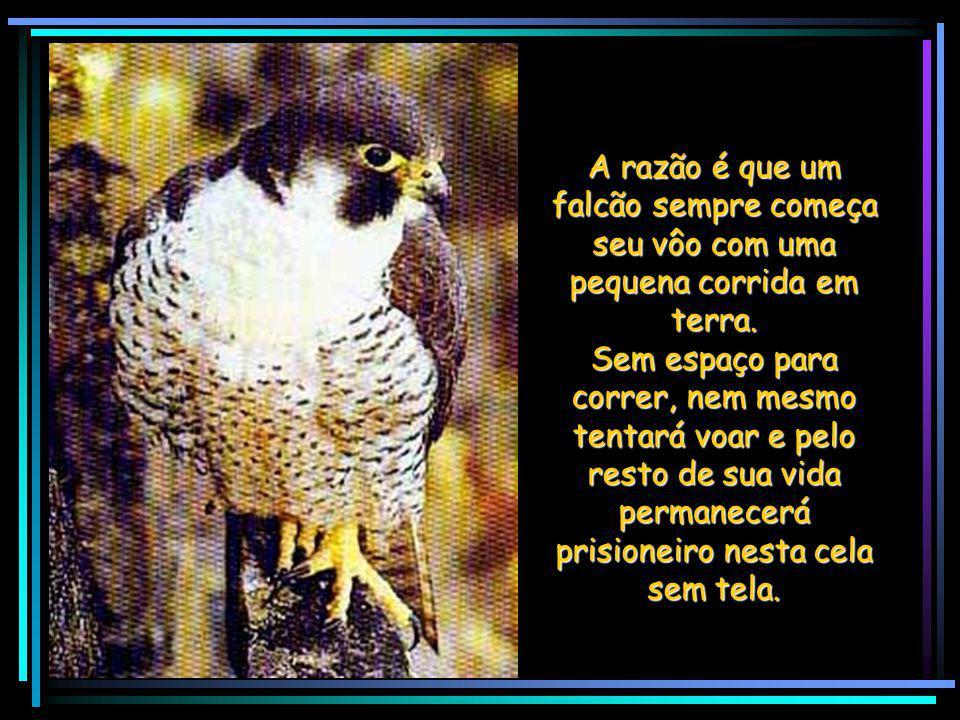 A razão é que um falcão sempre começa seu vôo com uma pequena corrida em terra.