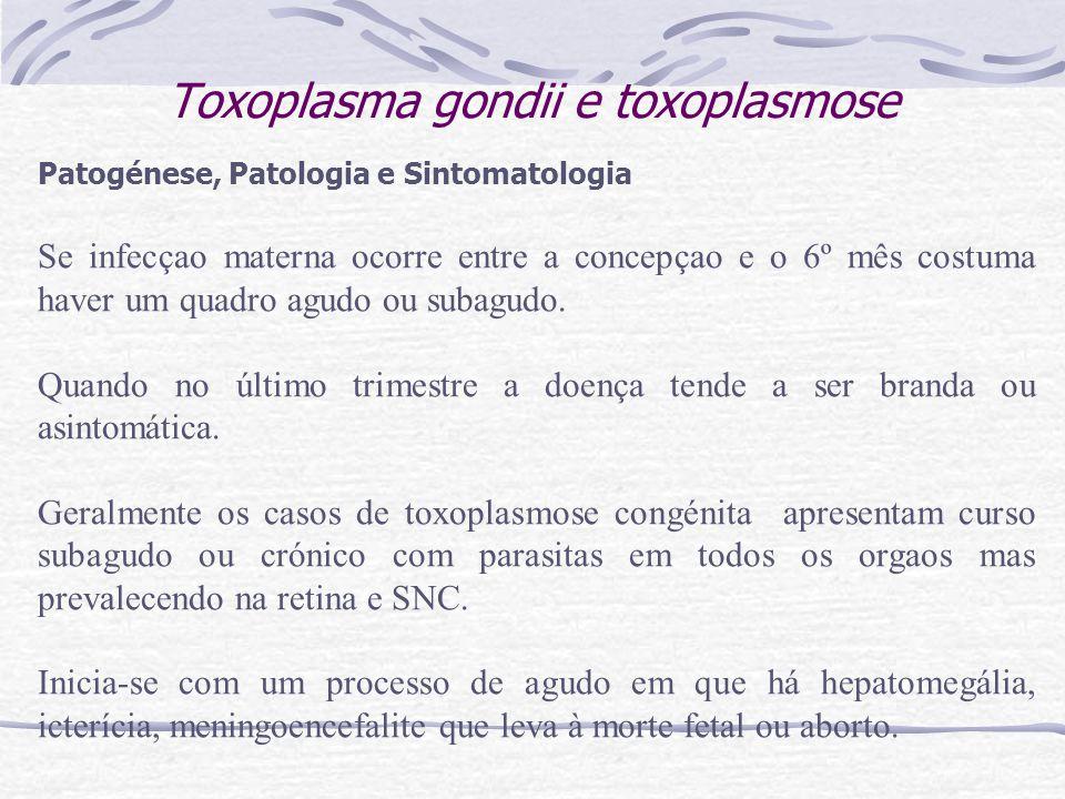 Toxoplasma gondii e toxoplasmose