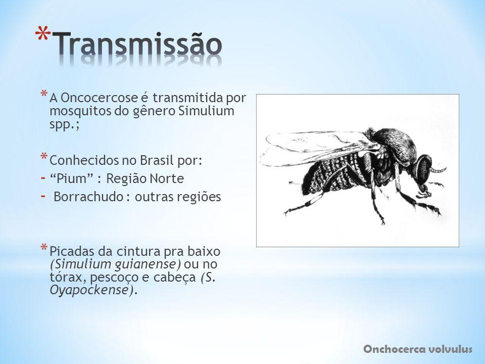 Transmissão A Oncocercose é transmitida por mosquitos do gênero Simulium spp.; Conhecidos no Brasil por: