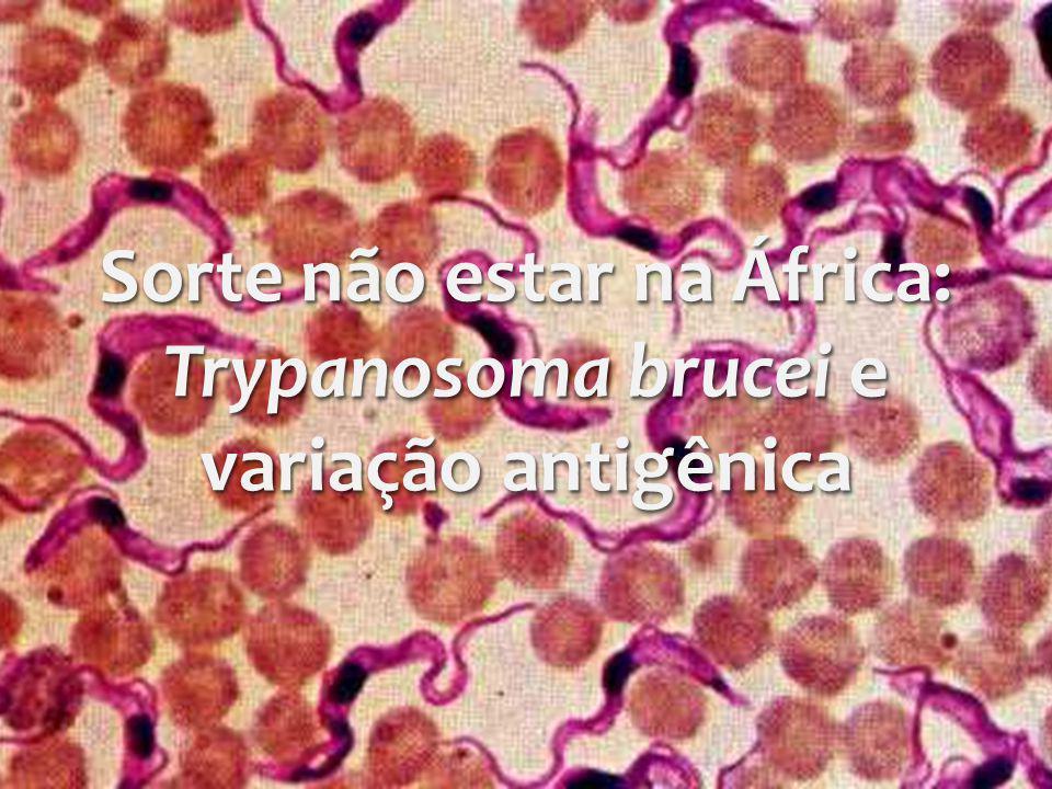 Sorte não estar na África: Trypanosoma brucei e variação antigênica