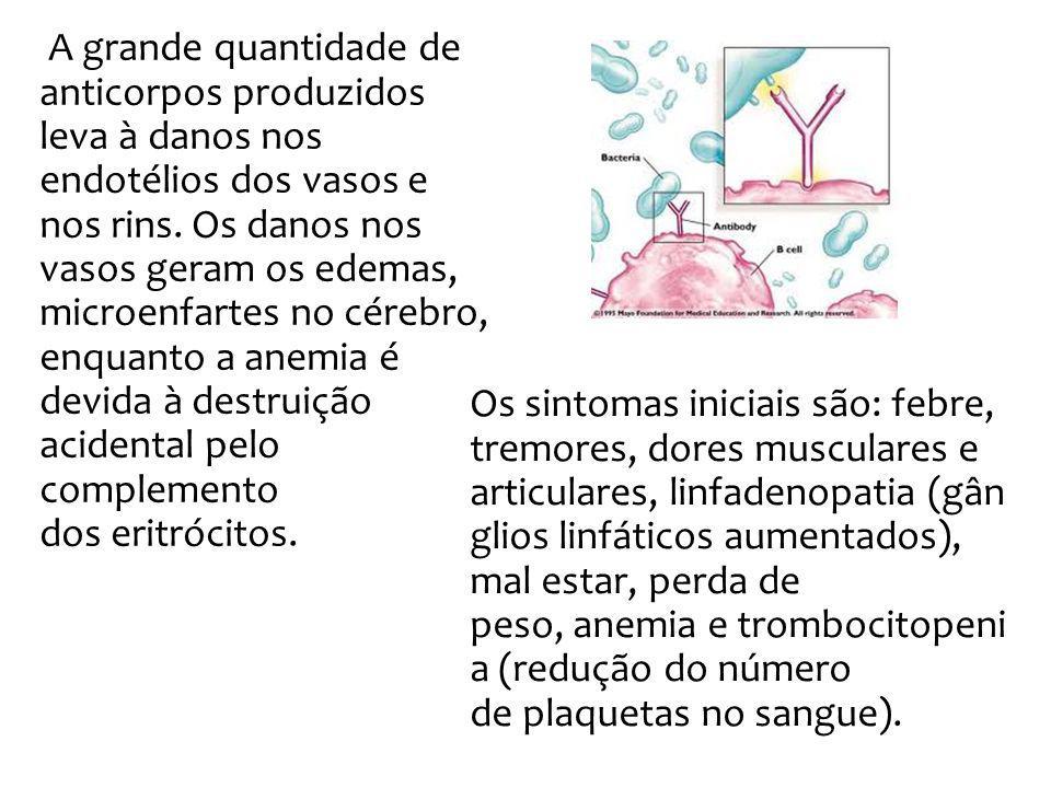 A grande quantidade de anticorpos produzidos leva à danos nos endotélios dos vasos e nos rins. Os danos nos vasos geram os edemas, microenfartes no cérebro, enquanto a anemia é devida à destruição acidental pelo complemento dos eritrócitos.