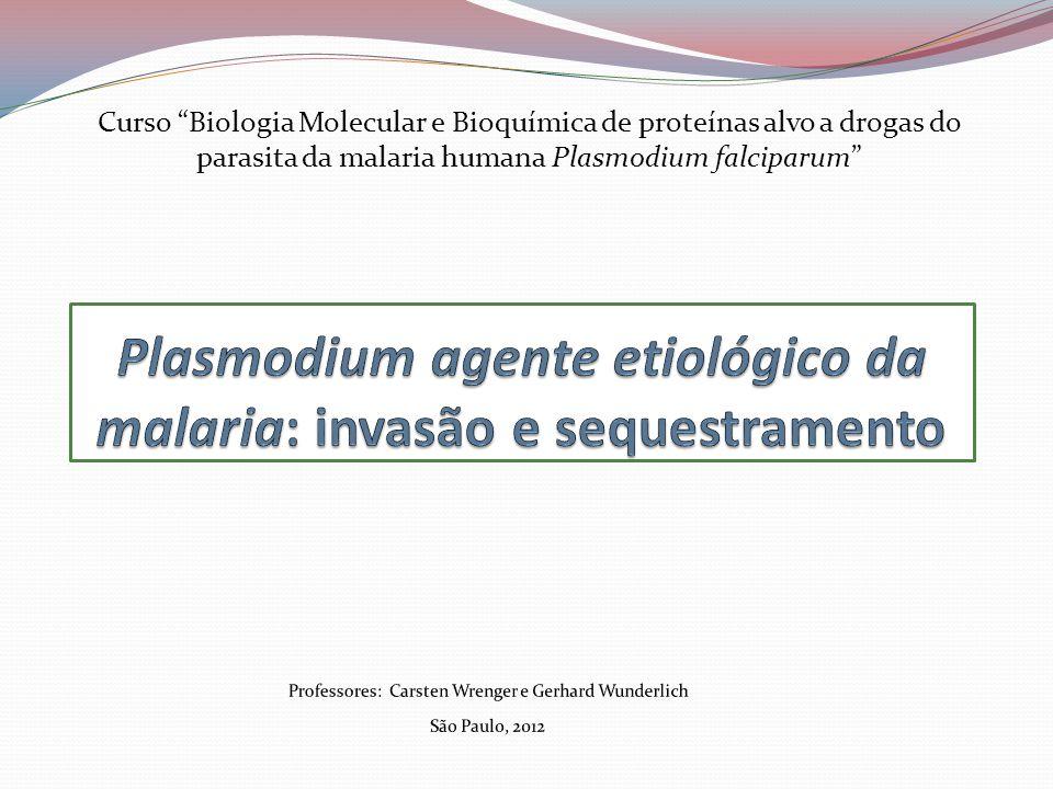 Plasmodium agente etiológico da malaria: invasão e sequestramento