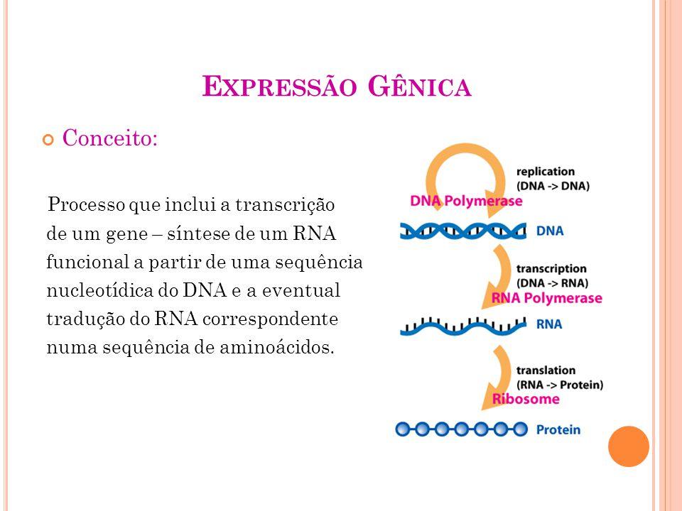 Expressão Gênica Conceito: Processo que inclui a transcrição